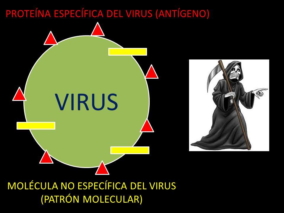 VIRUS PROTEÍNA ESPECÍFICA DEL VIRUS (ANTÍGENO)