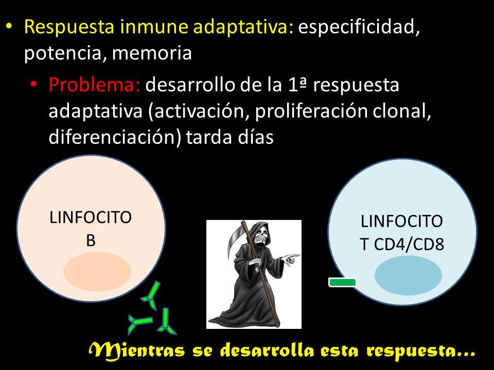 Respuesta inmune adaptativa: especificidad, potencia, memoria