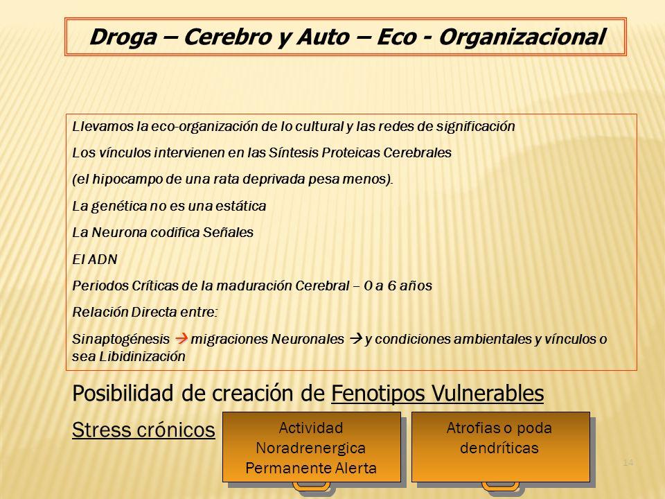Droga – Cerebro y Auto – Eco - Organizacional