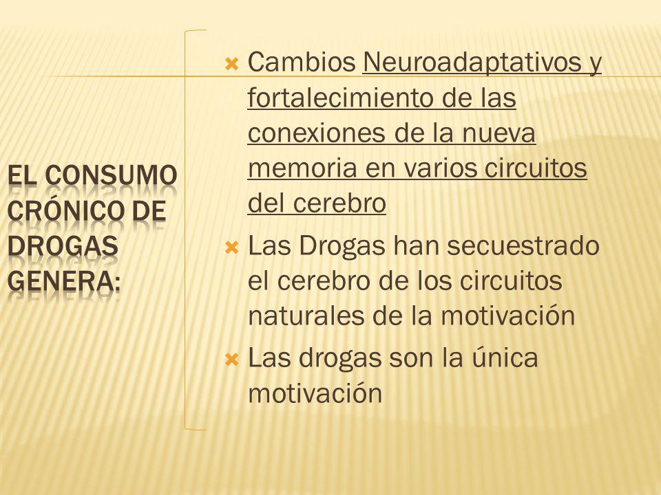 El consumo crónico de drogas genera:
