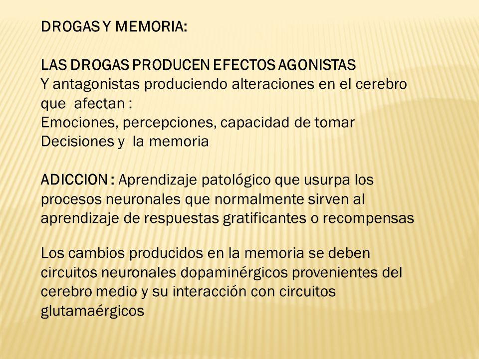 DROGAS Y MEMORIA: LAS DROGAS PRODUCEN EFECTOS AGONISTAS. Y antagonistas produciendo alteraciones en el cerebro que afectan :