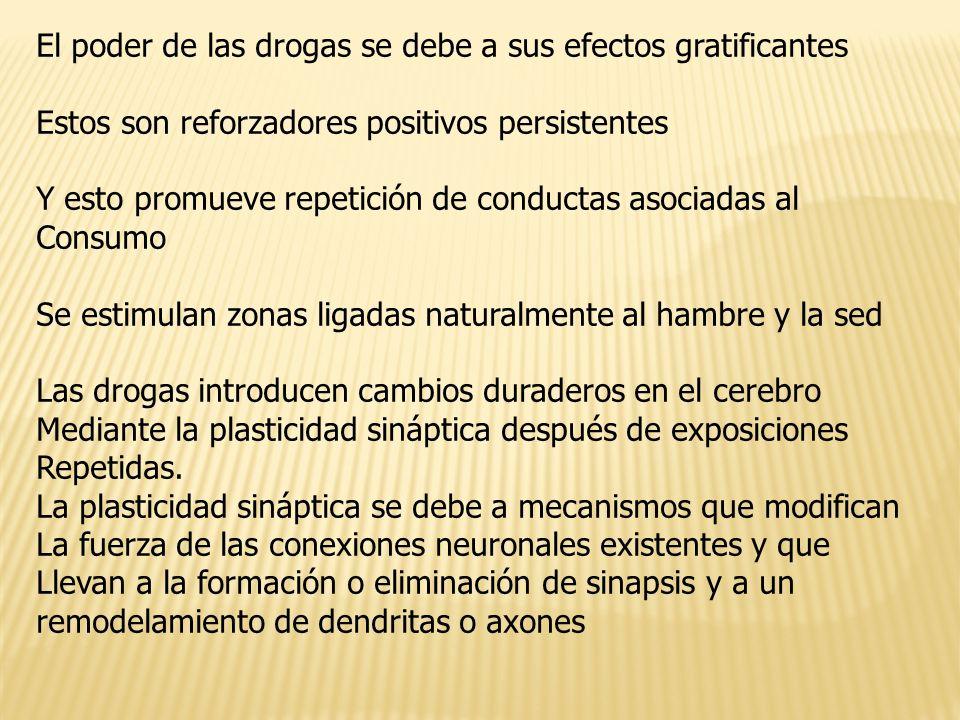 El poder de las drogas se debe a sus efectos gratificantes