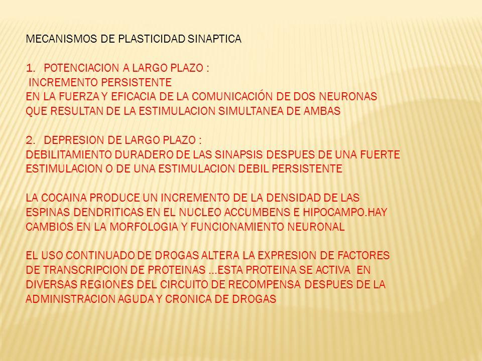 MECANISMOS DE PLASTICIDAD SINAPTICA