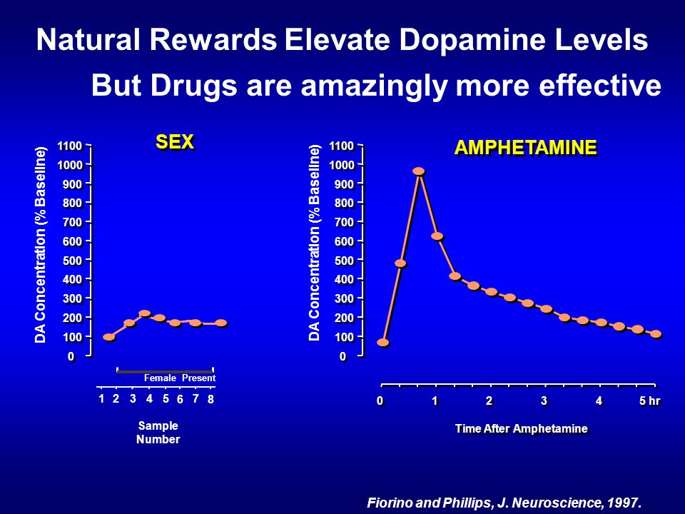 Natural Rewards Elevate Dopamine Levels