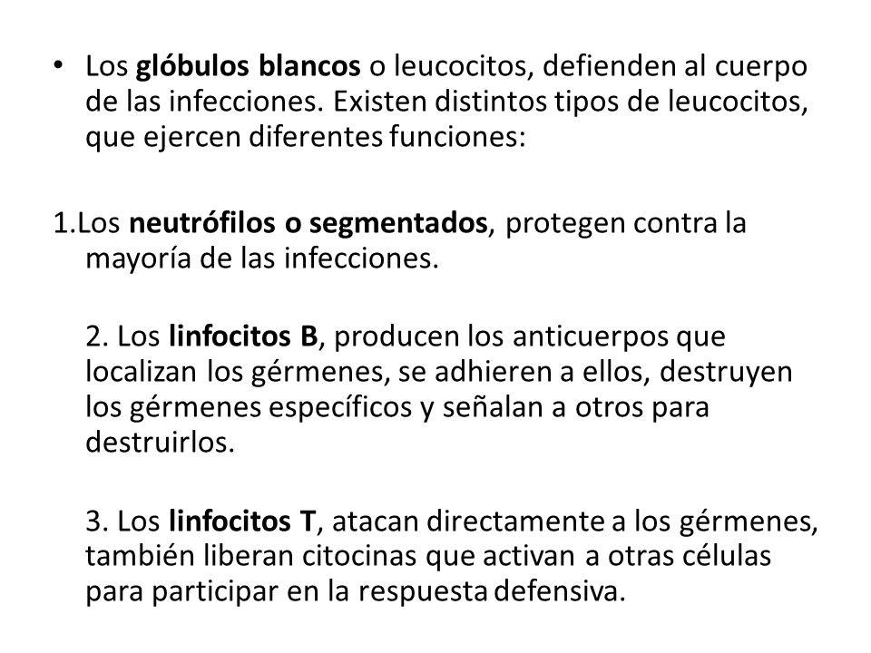 Los glóbulos blancos o leucocitos, defienden al cuerpo de las infecciones. Existen distintos tipos de leucocitos, que ejercen diferentes funciones: