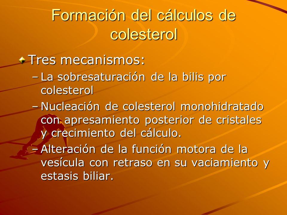 Formación del cálculos de colesterol