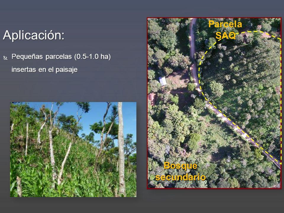 Aplicación: Parcela SAQ Bosque secundario