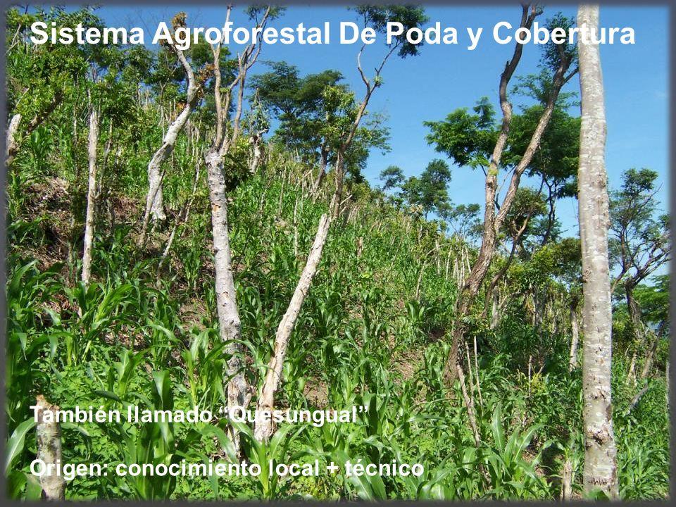 Sistema Agroforestal De Poda y Cobertura