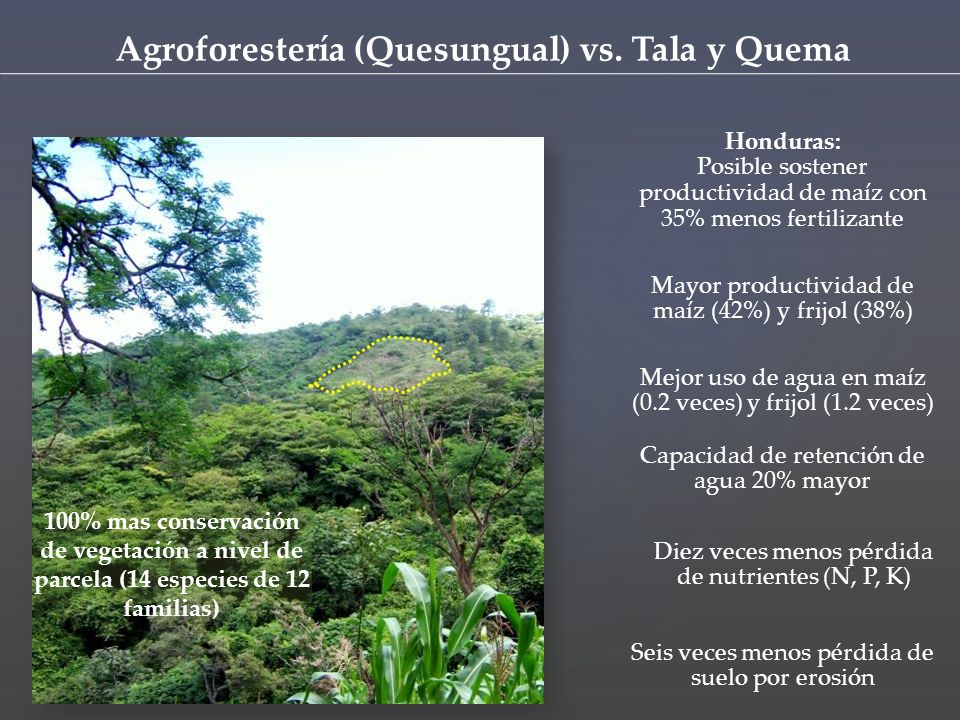 Agroforestería (Quesungual) vs. Tala y Quema