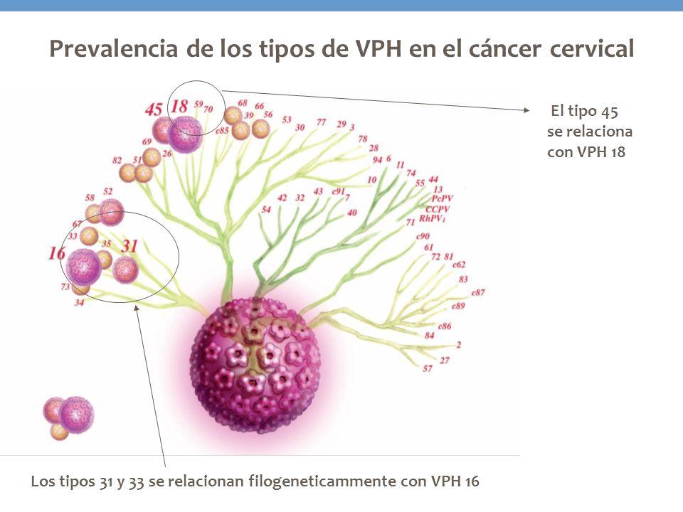 Prevalencia de los tipos de VPH en el cáncer cervical