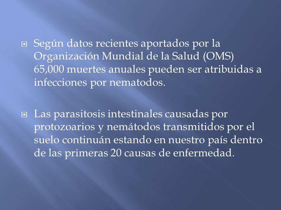 Según datos recientes aportados por la Organización Mundial de la Salud (OMS) 65,000 muertes anuales pueden ser atribuidas a infecciones por nematodos.