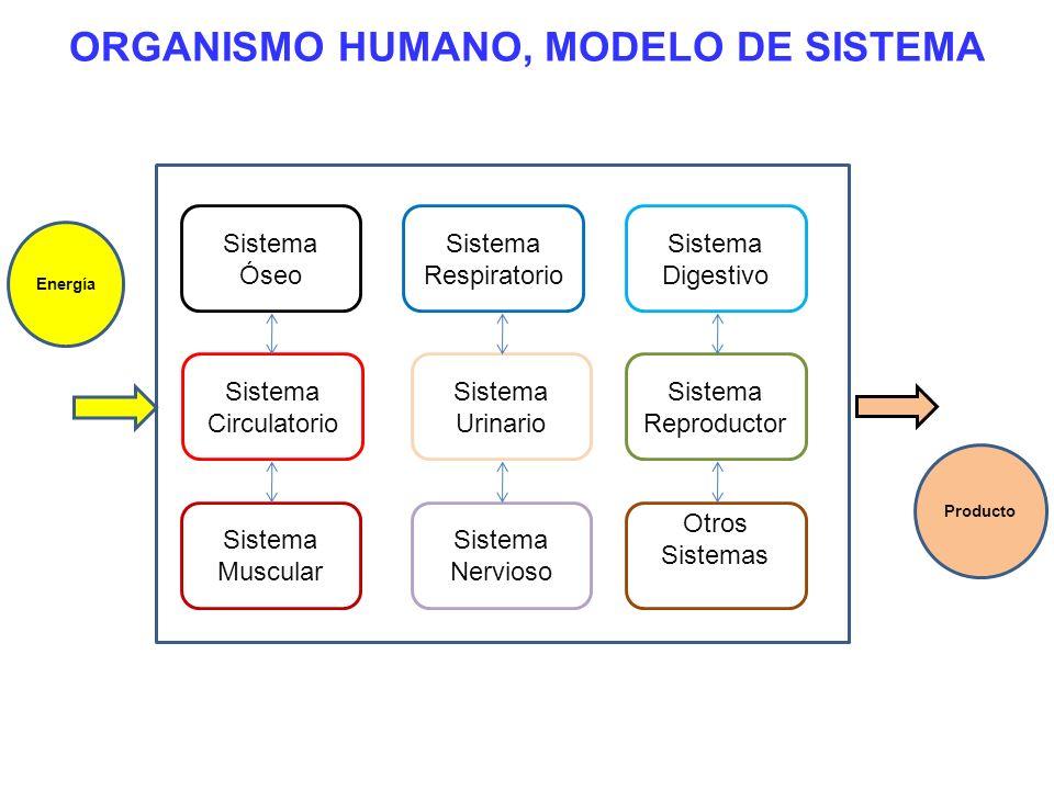 ORGANISMO HUMANO, MODELO DE SISTEMA