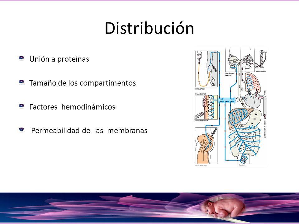 Distribución Unión a proteínas Tamaño de los compartimentos