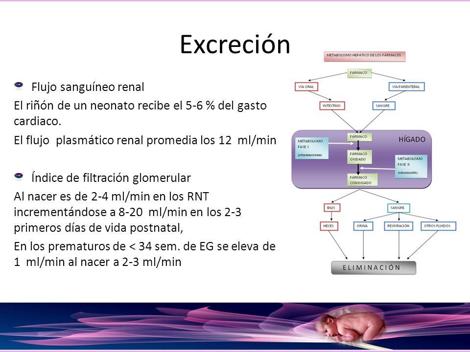 Excreción Flujo sanguíneo renal