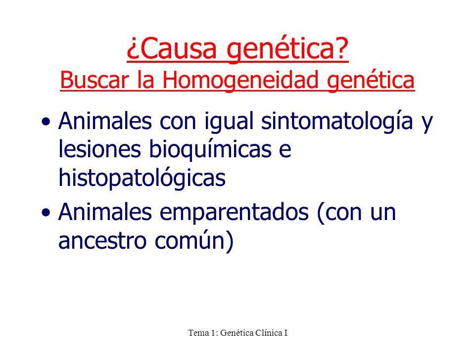 ¿Causa genética Buscar la Homogeneidad genética