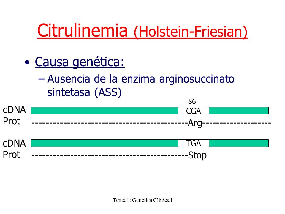 Citrulinemia (Holstein-Friesian)