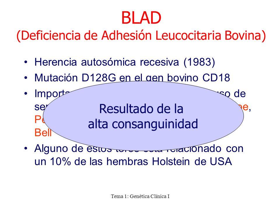 BLAD (Deficiencia de Adhesión Leucocitaria Bovina)