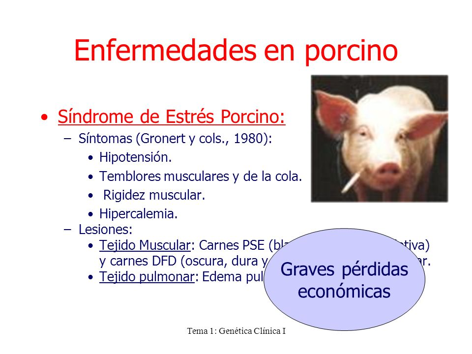 Enfermedades en porcino