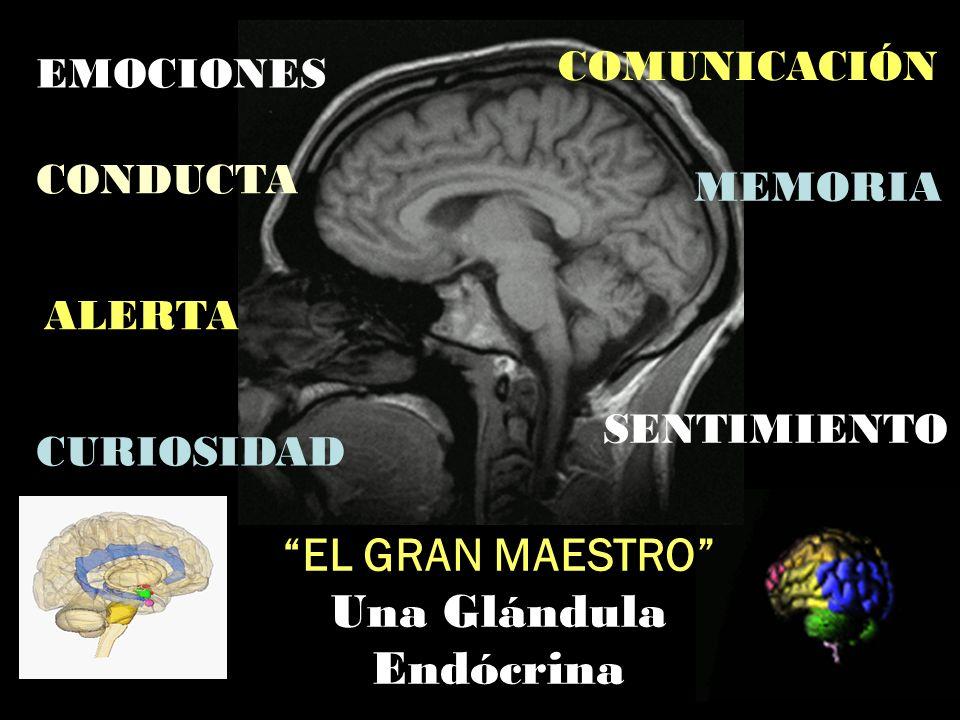 EL GRAN MAESTRO Una Glándula Endócrina