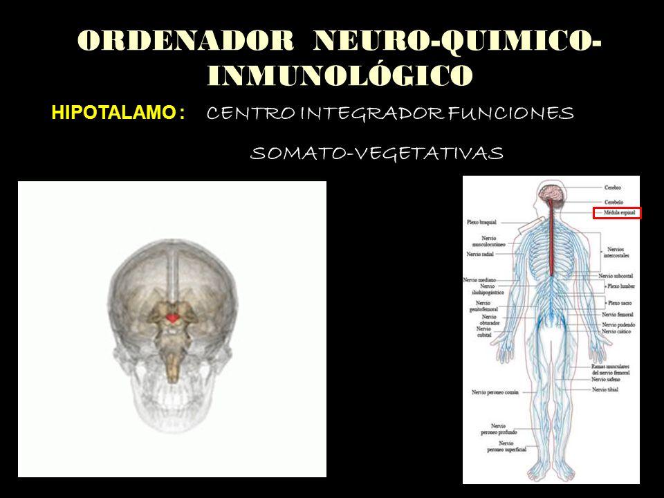 ORDENADOR NEURO-QUIMICO- INMUNOLÓGICO