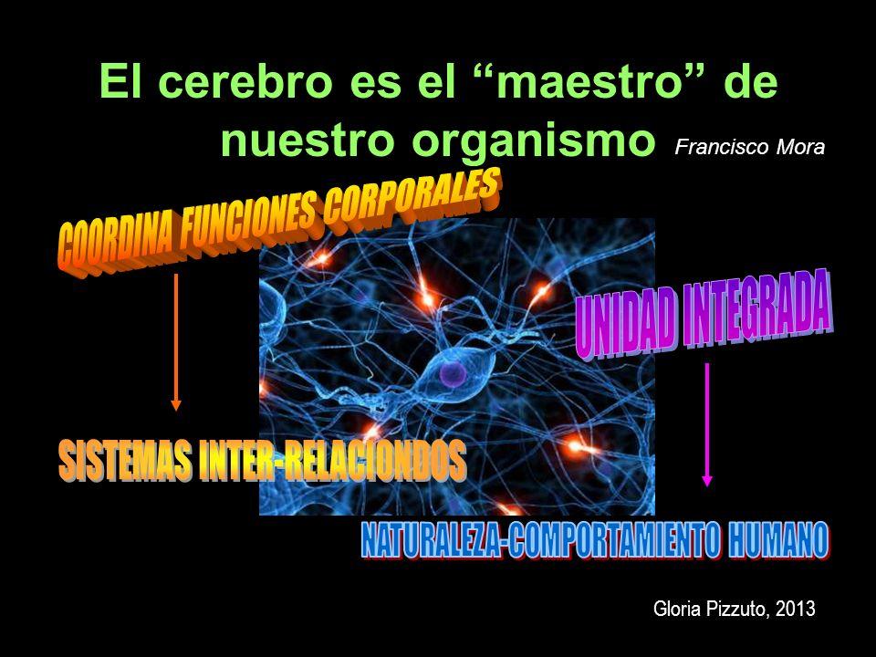 El cerebro es el maestro de nuestro organismo