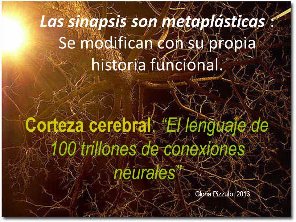 Las sinapsis son metaplásticas : Se modifican con su propia historia funcional.