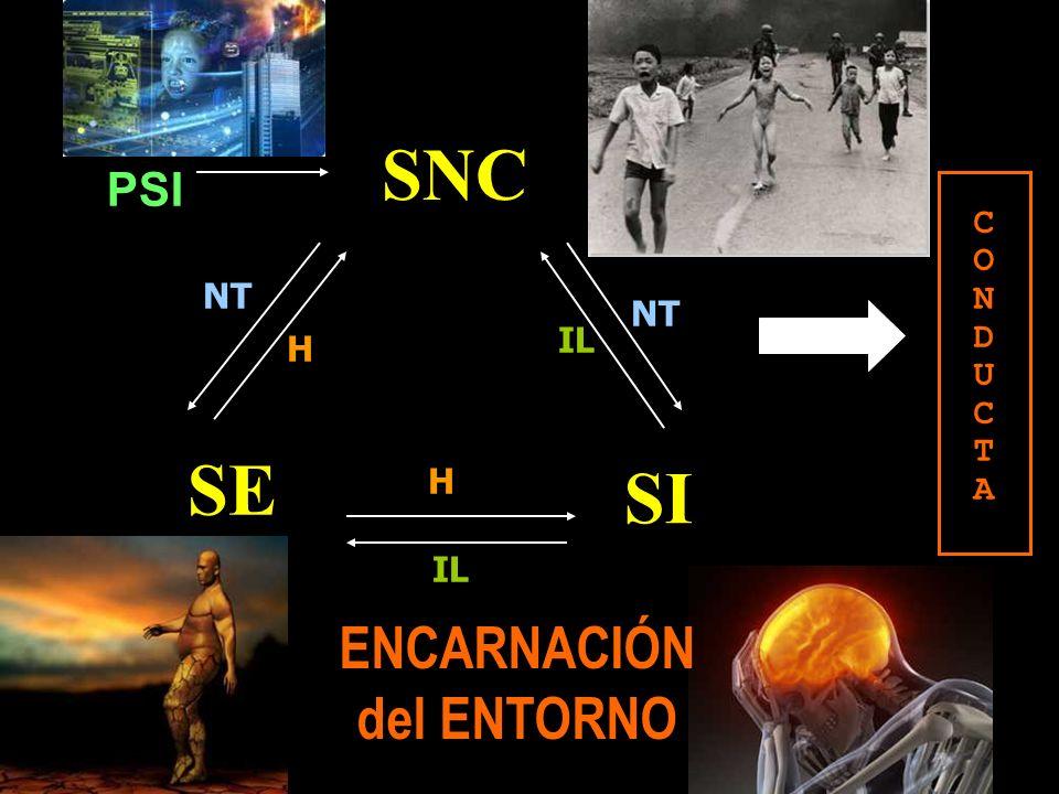 ENCARNACIÓN del ENTORNO