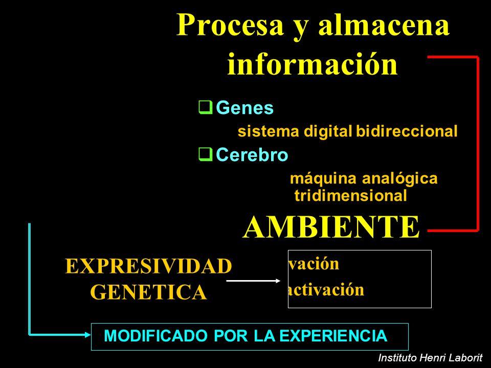 Procesa y almacena información