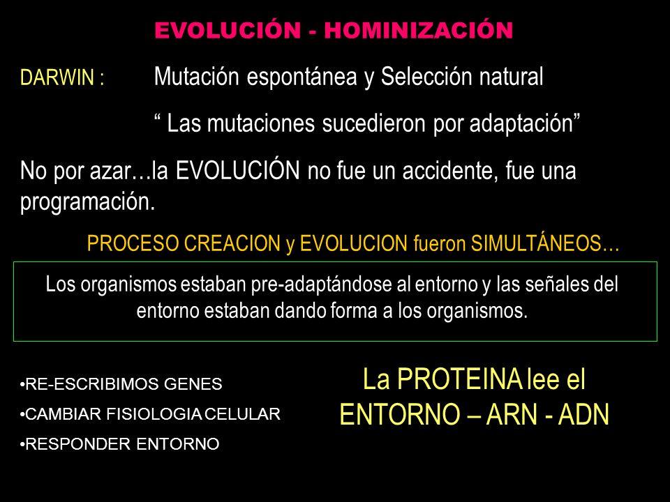 La PROTEINA lee el ENTORNO – ARN - ADN