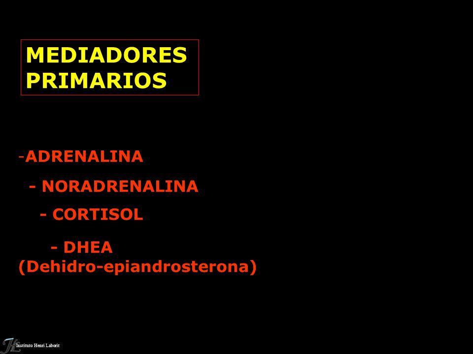 MEDIADORES PRIMARIOS ADRENALINA - NORADRENALINA - CORTISOL - DHEA