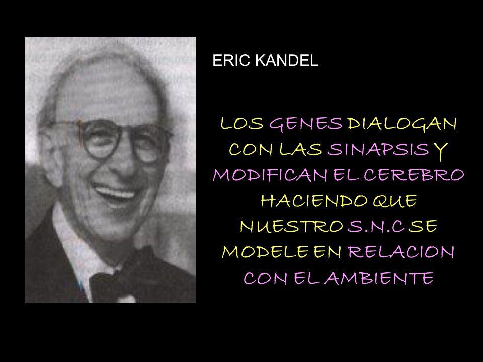 ERIC KANDEL LOS GENES DIALOGAN CON LAS SINAPSIS Y MODIFICAN EL CEREBRO HACIENDO QUE NUESTRO S.N.C SE MODELE EN RELACION CON EL AMBIENTE.