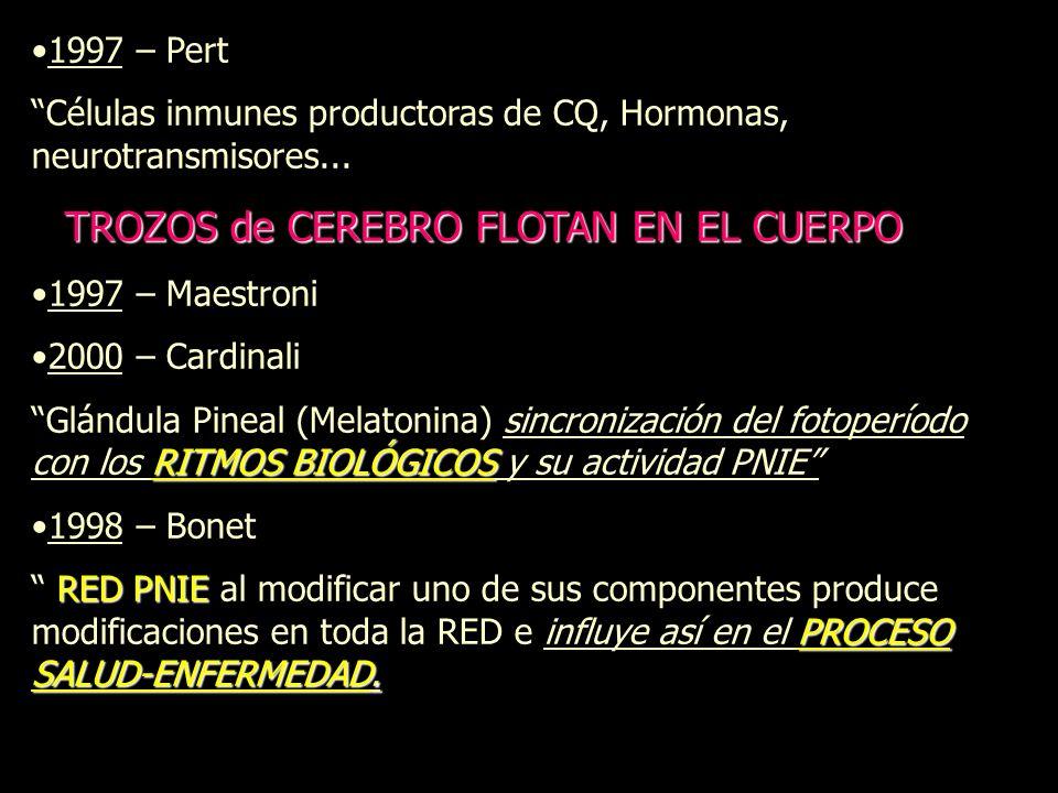 1997 – Pert Células inmunes productoras de CQ, Hormonas, neurotransmisores... TROZOS de CEREBRO FLOTAN EN EL CUERPO.