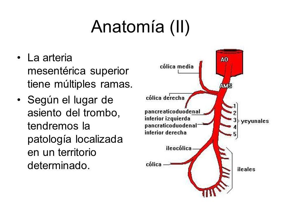 Anatomía (II) La arteria mesentérica superior tiene múltiples ramas.