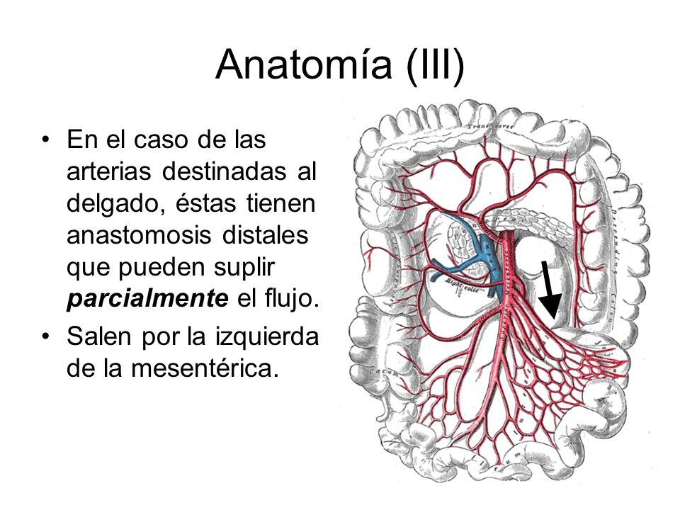 Anatomía (III) En el caso de las arterias destinadas al delgado, éstas tienen anastomosis distales que pueden suplir parcialmente el flujo.