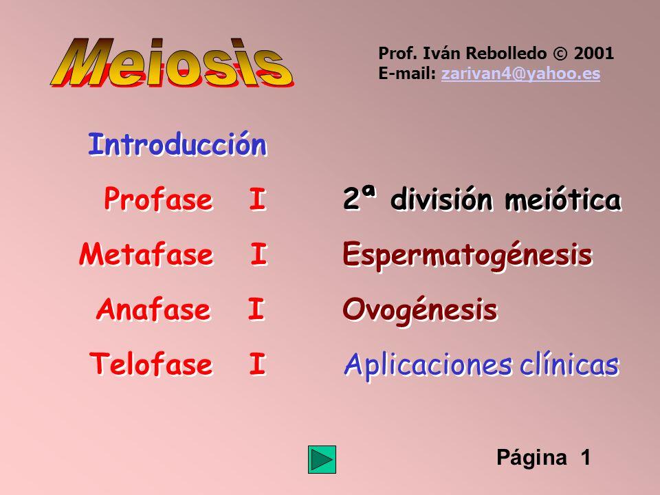 Meiosis Introducción Profase I 2ª división meiótica Metafase I