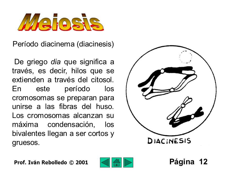 Período diacinema (diacinesis)