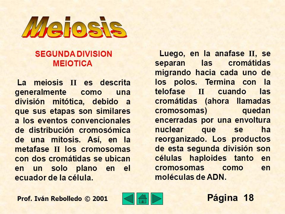 SEGUNDA DIVISION MEIOTICA