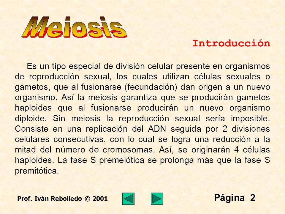 Meiosis Página 2 Introducción