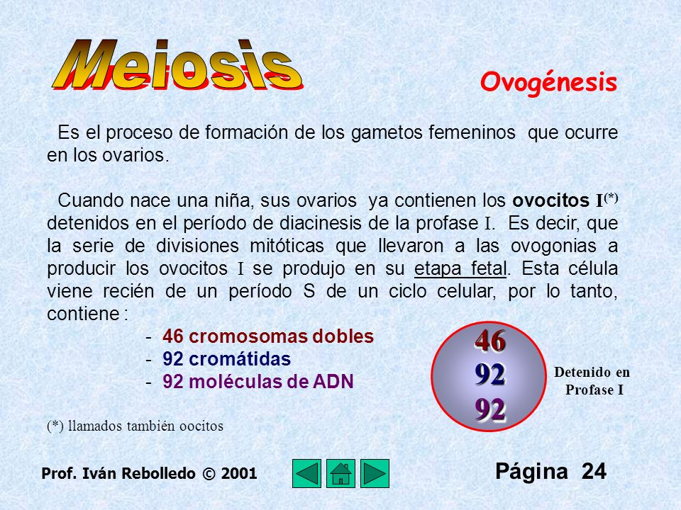 Meiosis 46 92 92 Ovogénesis Página 24