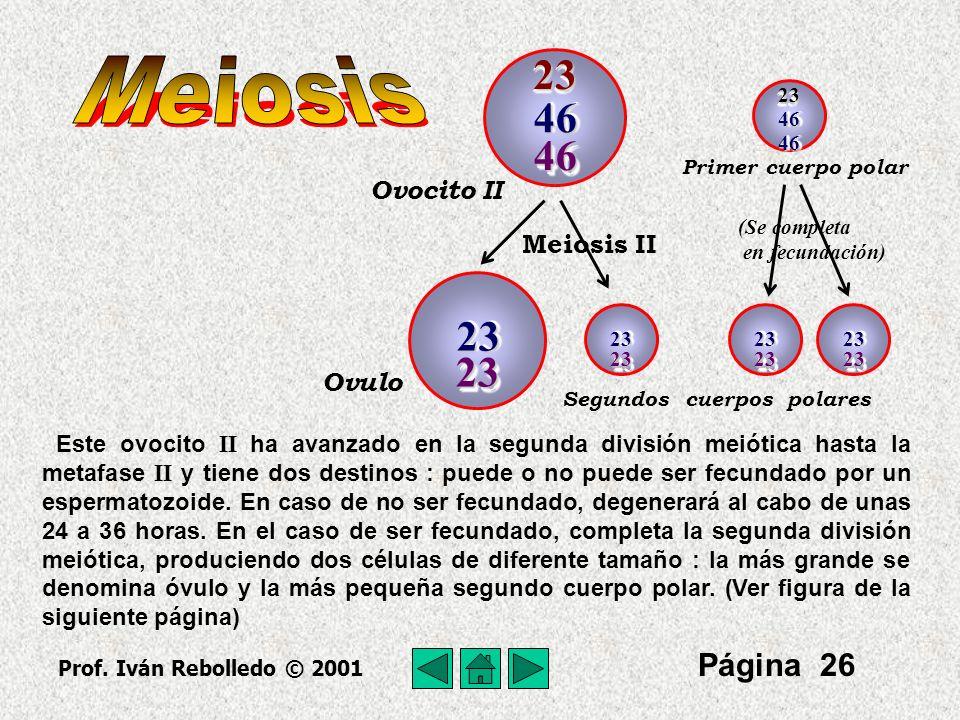 Meiosis 23 46 46 23 23 Página 26 Ovocito II Meiosis II Ovulo