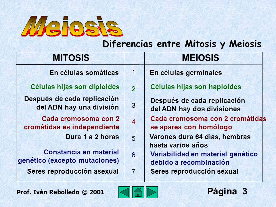 Meiosis Diferencias entre Mitosis y Meiosis MITOSIS MEIOSIS Página 3