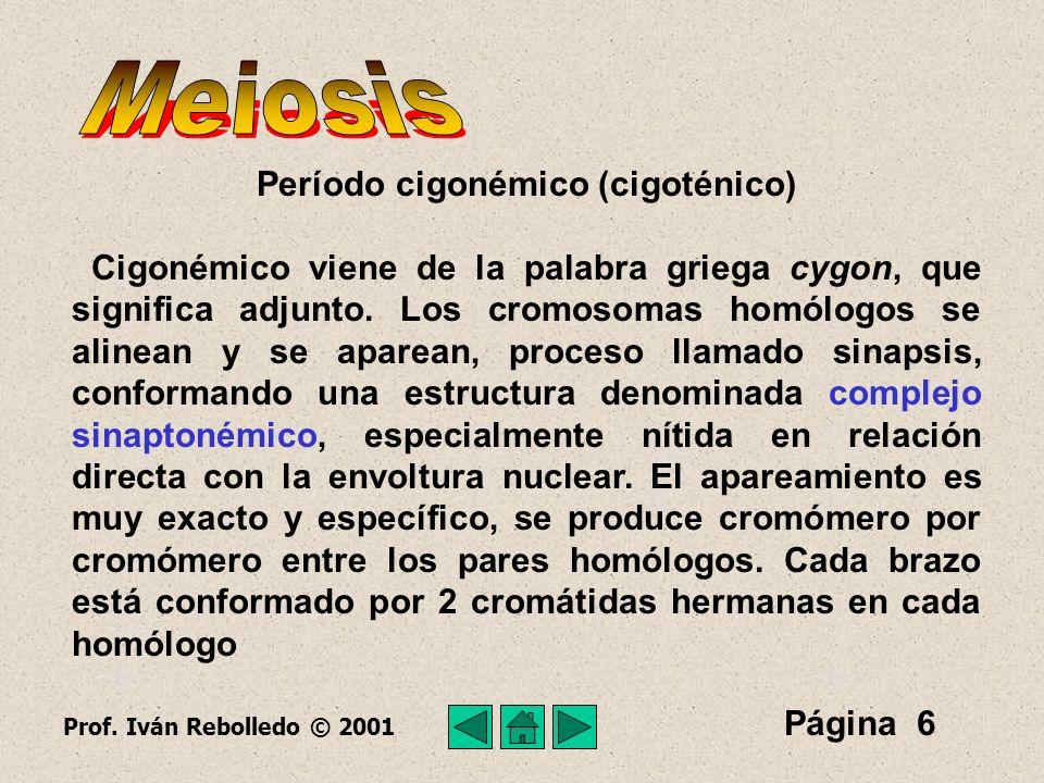 Período cigonémico (cigoténico)