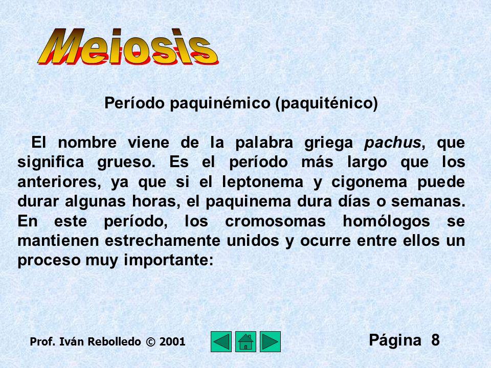 Período paquinémico (paquiténico)