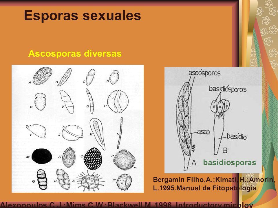 Esporas sexuales Ascosporas diversas basidiosporas