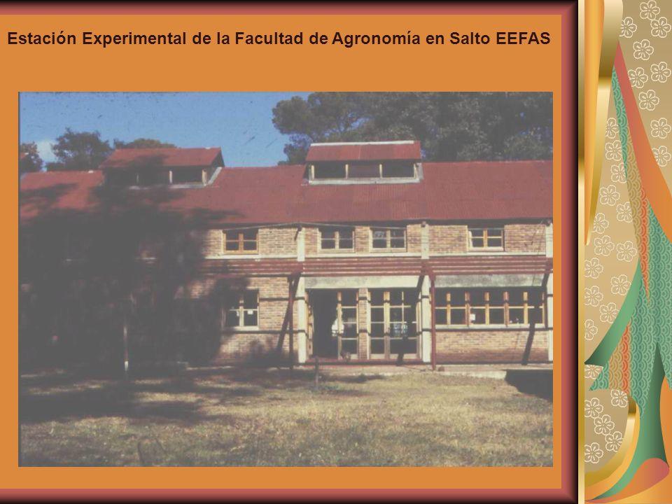 Estación Experimental de la Facultad de Agronomía en Salto EEFAS