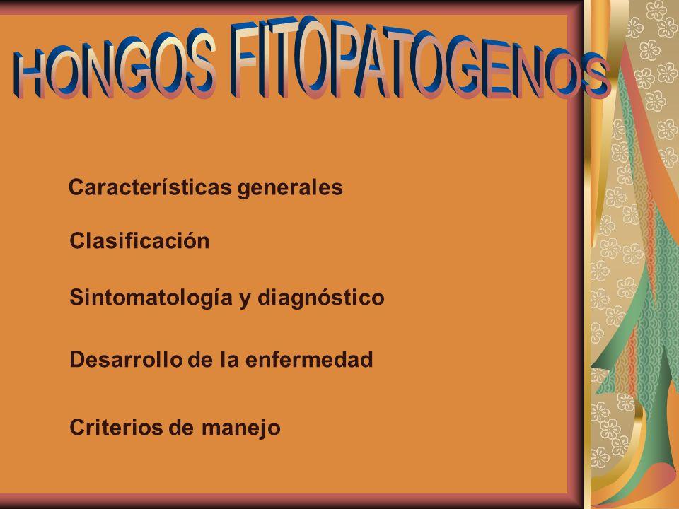 HONGOS FITOPATOGENOS Características generales Clasificación