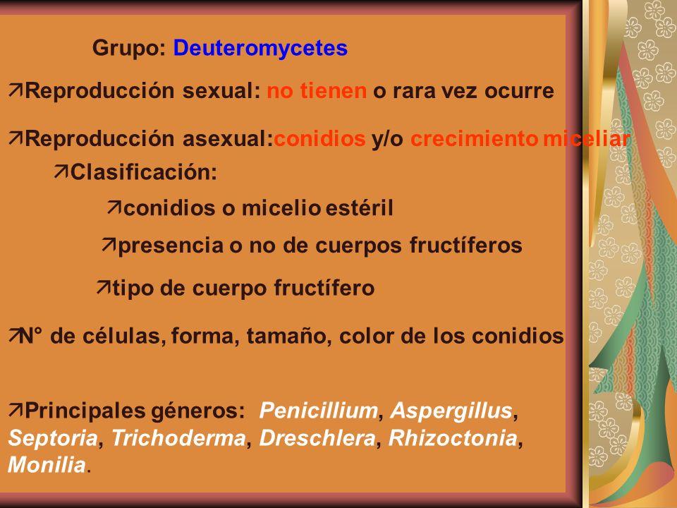 Grupo: Deuteromycetes