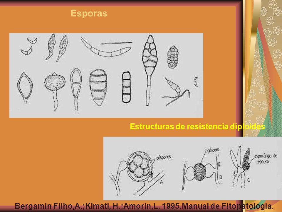 Esporas Estructuras de resistencia diploides