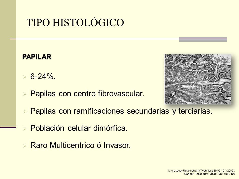 TIPO HISTOLÓGICO 6-24%. Papilas con centro fibrovascular.