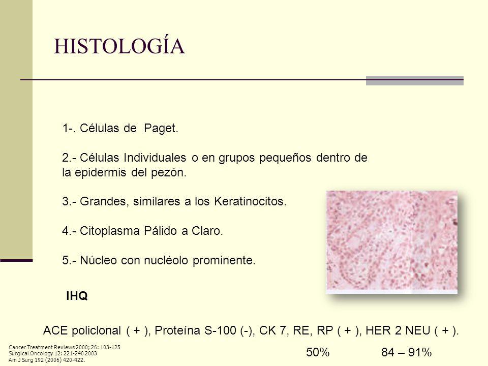 HISTOLOGÍA 1-. Células de Paget.